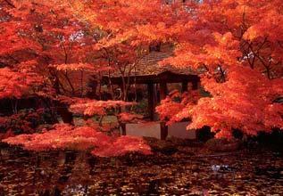 Fort Worth Botanic Japanese Gardens Fall 2