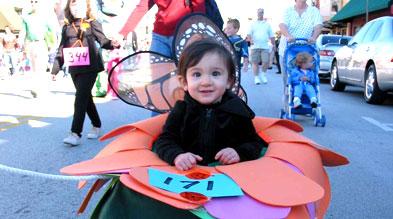 Grapevi butterfly Festival