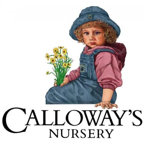 Calloways